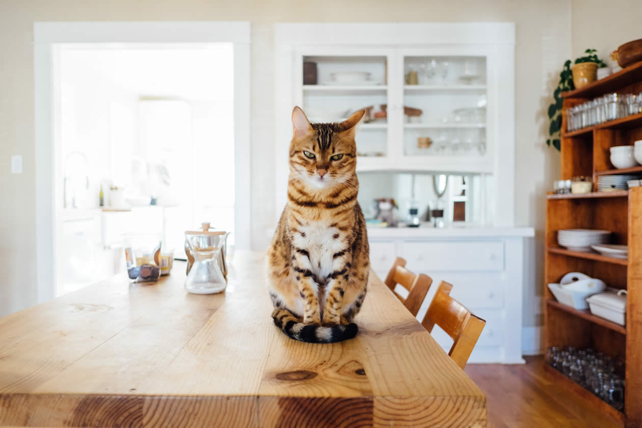 Cats that climb can trigger traditional home alarm systems